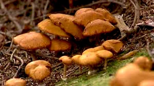 champignons_620