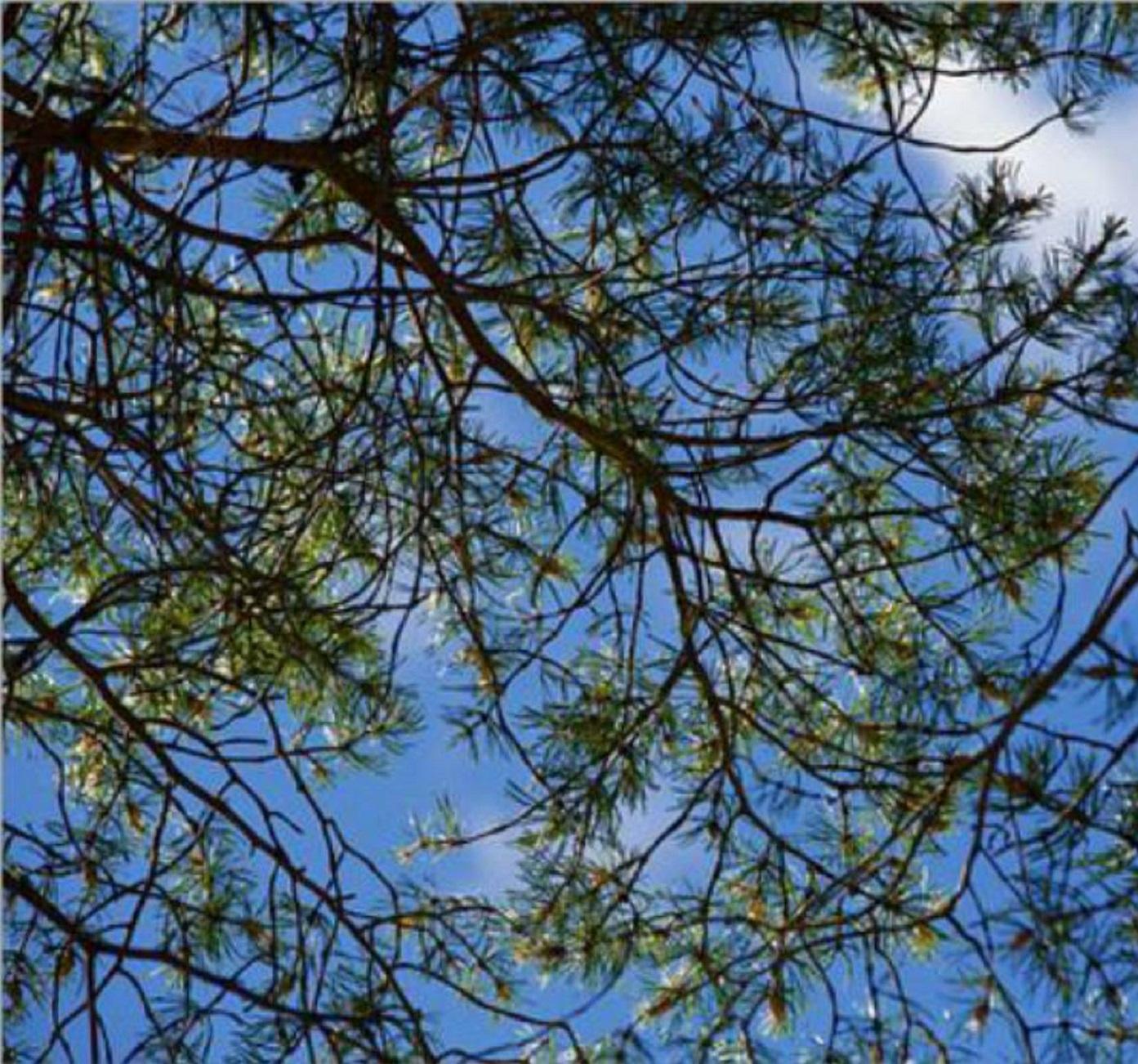 sky-2488298__340carréebis